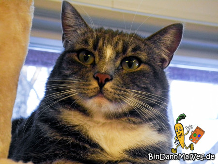 Katze des Tierschutzvereins Tromso