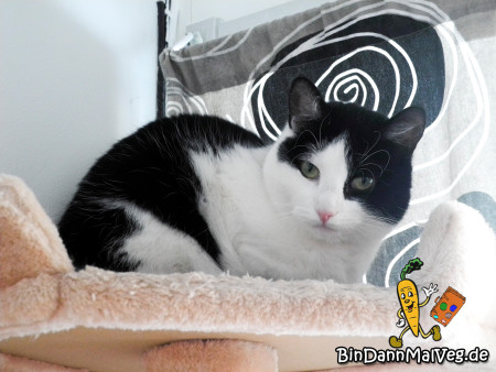 Katze Bethanie