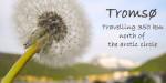 Tromsø: Travelling 350 km north of the arctic circle